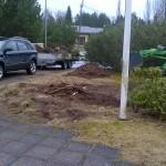 Borttagning av buske 1