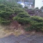 Borttagning av buske