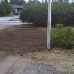 Borttagning av buske 2