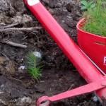 Skogsplantering 2