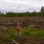 Skogsplantering 3